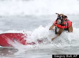 A surfer and his dog compete at the Loews Coronado Bay Resort Surf Dog Competition, which took place June 16 at Imperial Beach, California.