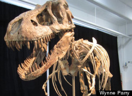 This dinosaur, a relative of Tyrannosaurus rex, is the subject of legal battle. The president of Mongolia says it was almost certainly smuggled out of that country.