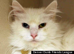 Heaven is a spayed domestic longhair mix who reportedly loves having her cheeks scratched.