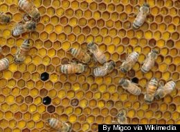 According to police, when the beekeeper went to inspect his bees, he found 100 hives were missing. FLICKR: MARK-HOBBS