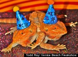 Todd Ray/ Venice Beach Freakshow