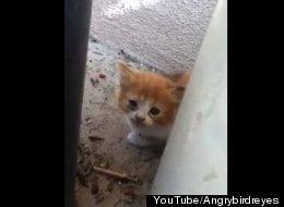 YouTube/Angrybirdreyes