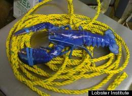 Lobster Institute