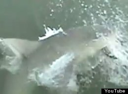A woman had a close call with what might be a bull shark while fishing off of a pier.