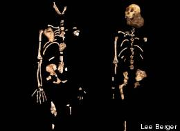 Two partial skeletons of Australopithecus sediba were unveiled to the public in 2010. The one on the left represents an adult female, the one on the right a juvenile male nicknamed Karabo.