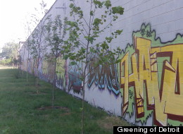 The Greening of Detroit is planting at least 6,000 trees in the city to study how they can be used to reduce contaminants in the soil. (Greening of Detroit).