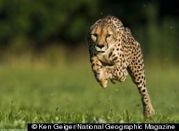 © Ken Geiger/National Geographic Magazine