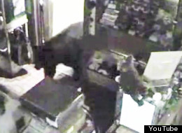 Screenshot of one lucky black bear who found his way into an empty candy shop.