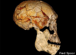 Four decades ago, in 1972, the Koobi Fora Research Project (KFRP) discovered the enigmatic fossilized skull known as KNM-ER 1470, or