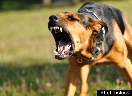 Owners of aggressive dogs are more likely to be aggressive themselves, a new study finds.