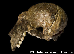 WikiMedia: Archaeodontosaurus