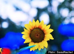 Flickr: SaraiRachel