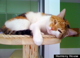 Clarissa is an affectionate 2-year-old Calico female cat who would like to be an only pet.