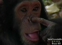 Enough monkey business.