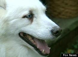 Zander the dog tracked down his owner, John Dolan, who had checked into a hospital almost two miles from their home.