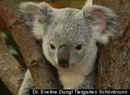 Dr. Eveline Dungl Tiergarten Schönbrunn