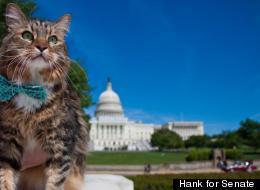 Hank for Senate