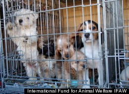 International Fund for Animal Welfare IFAW