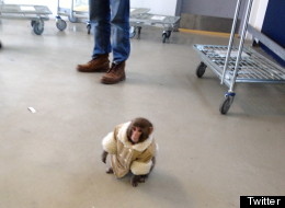 A primate sanctuary is alleging that the woman who owned a Japanese macaque known as the Ikea monkey strangled and hit the animal with a wooden spoon.