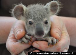 ZooBorns 25 Cutest Baby Animals