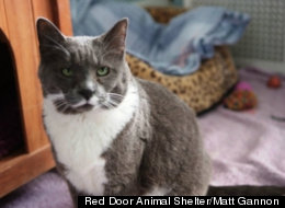 Red Door Animal Shelter/Matt Gannon