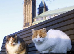 A decades-old cat sanctuary nestled behind Canada's Parliament buildings is heading towards a quiet end as its feline population slowly shrinks. (CP)