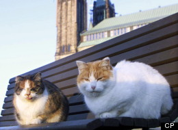 Two of Parliament Hill's resident stray cats sit on a park bench outside the House of Commons in Ottawa on December 1, 1999. Volunteers have asked the scataury to be shut down after all four remaining cats were adopted. THE CANADIAN PRESS/Tom Hanson