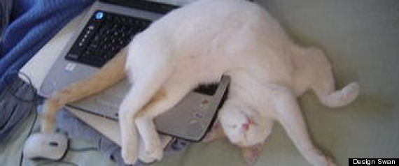 Funny Cats Sleeping in Weird Positions